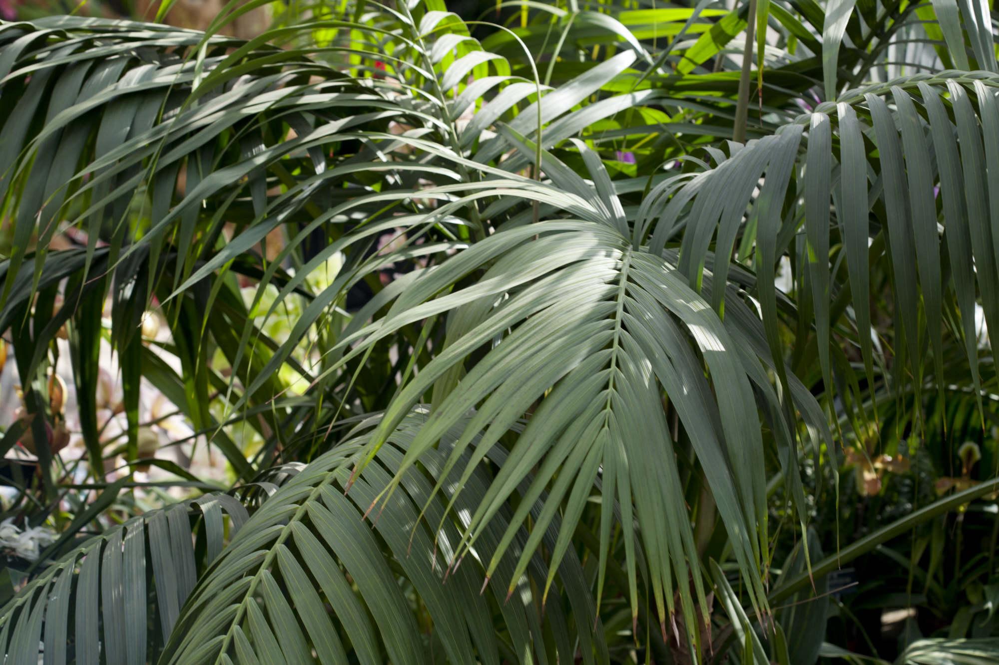 flat palm