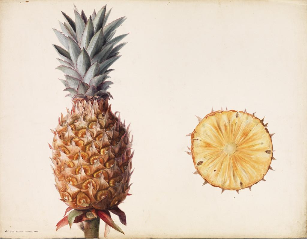 <i>Ananas comosus</i> (F)