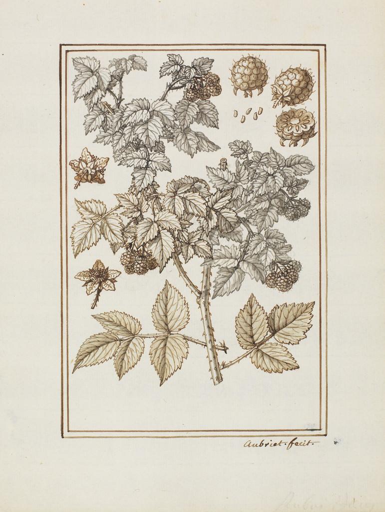 common raspberry