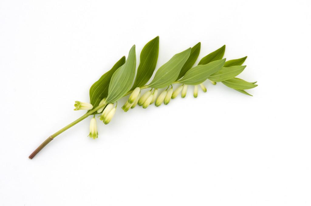 RHS advice & tips on garden & indoor plants | Plant finder