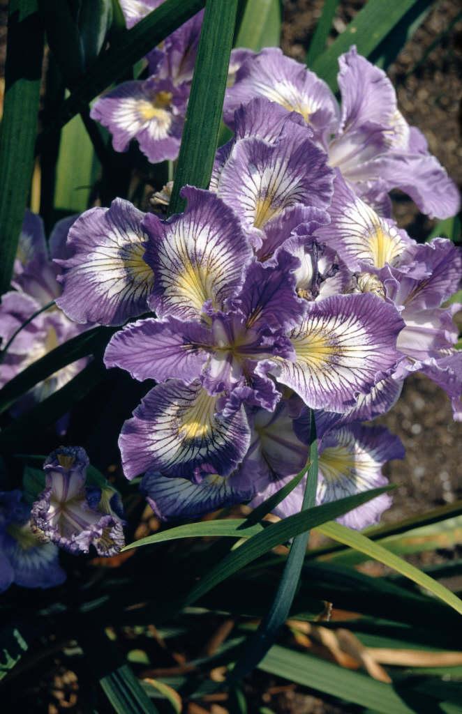 Rhs Advice Tips On Garden Indoor Plants Plant Finder